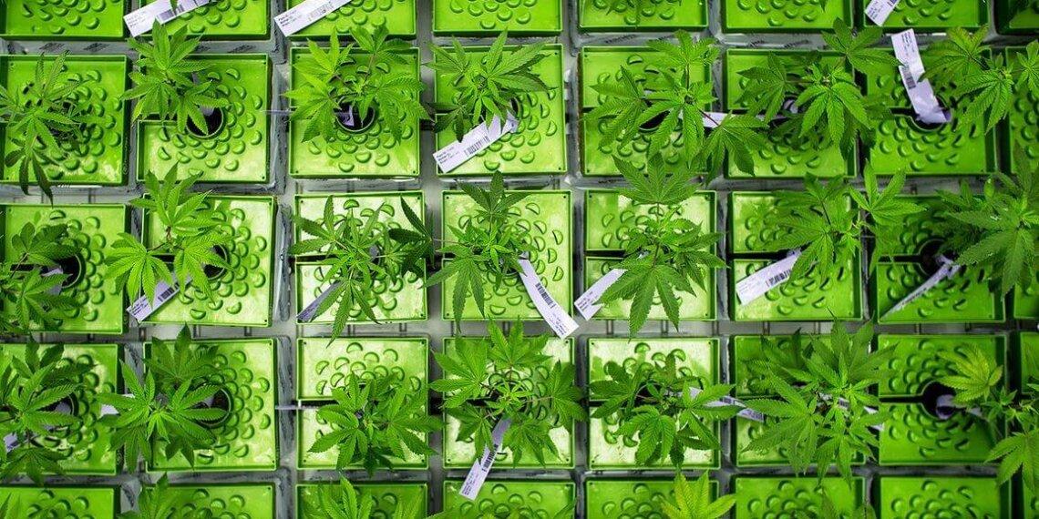 Cannabis Banking Options
