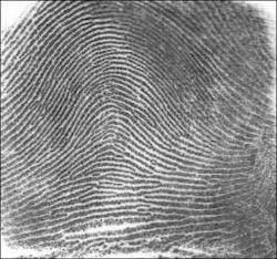 Types of Fingerprint - Arch