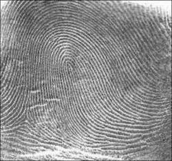 Types of Fingerprint - Loop