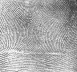 Types of Fingerprint - Whorl