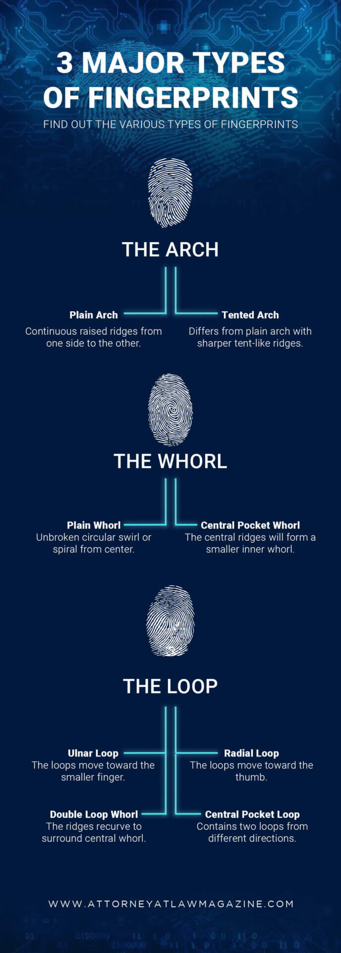 3 major types of fingerprints