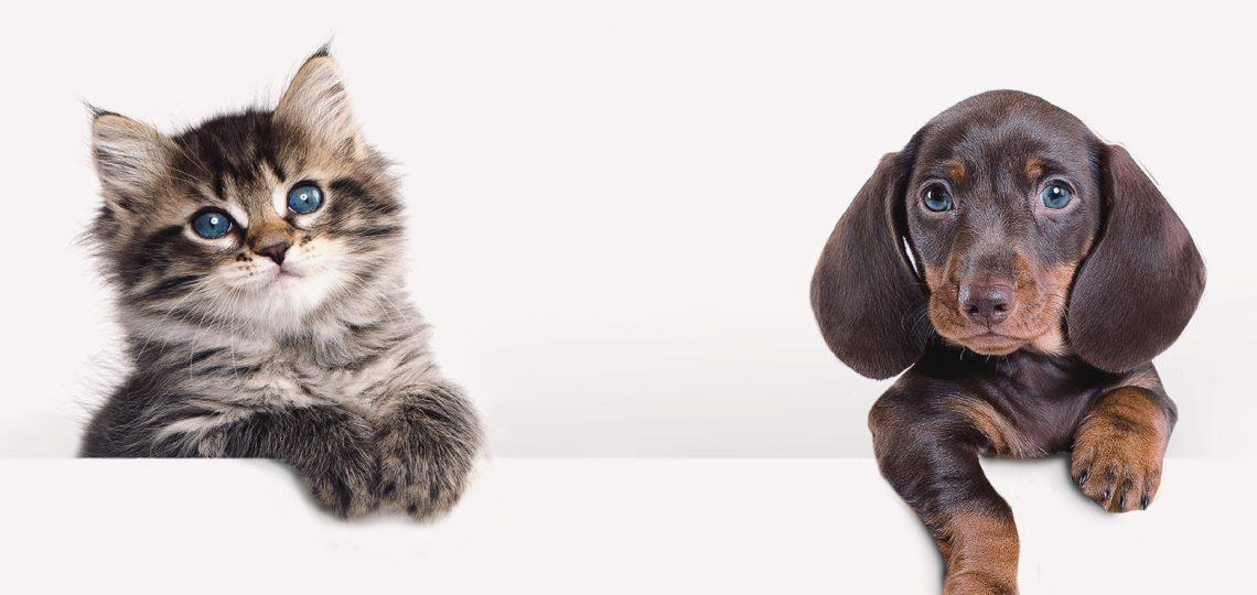 kitty & puppy ip