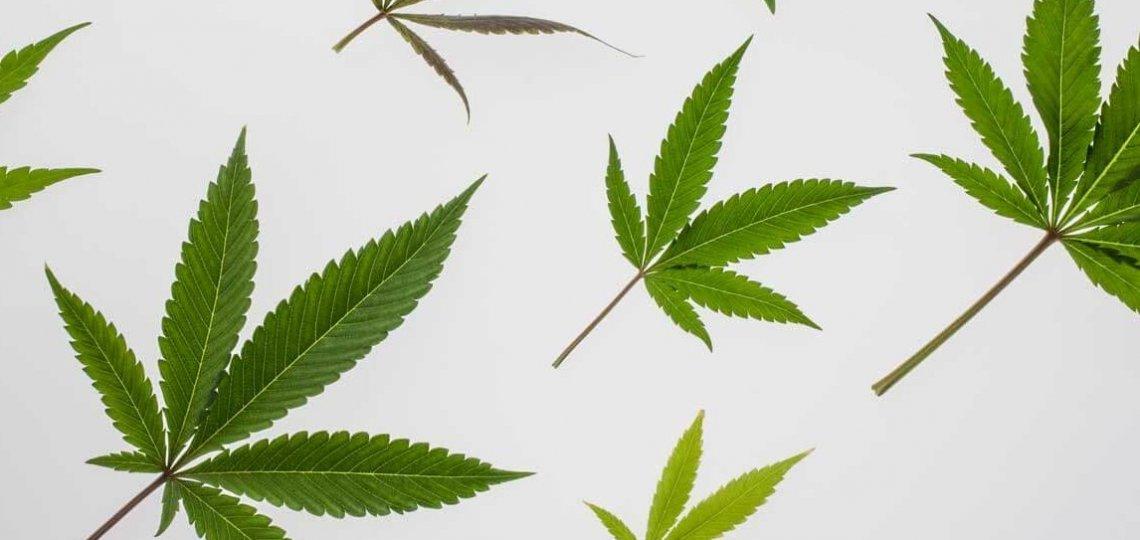 cannabis industry Medical Marijuana